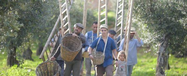 bauern mit leitern auf dem weg zur olivenernte bei centonze in sizilien