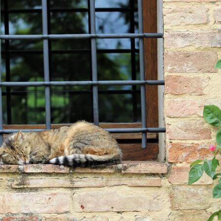 schlafende katze auf mauer daniela-turcanu-680748-unsplash